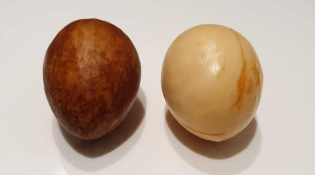 avocado seed with and without inner shell before growing