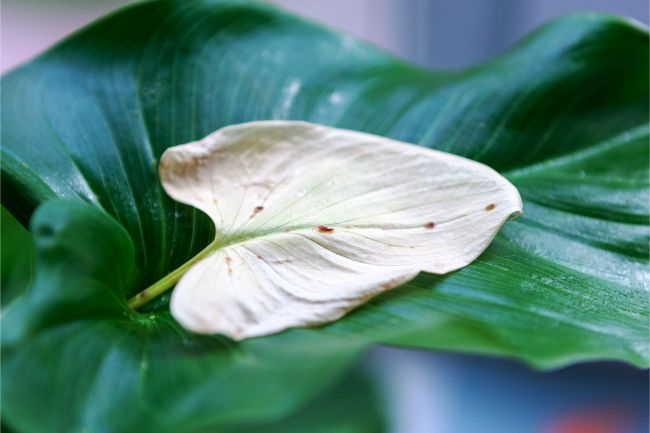 do indoor plants attract bugs