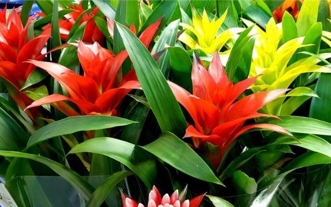 bromeliads are hard to kill houseplants