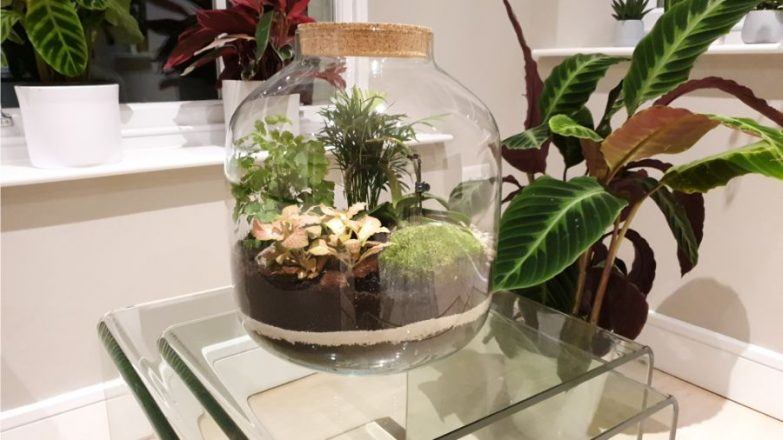 how to care for a closed terrarium