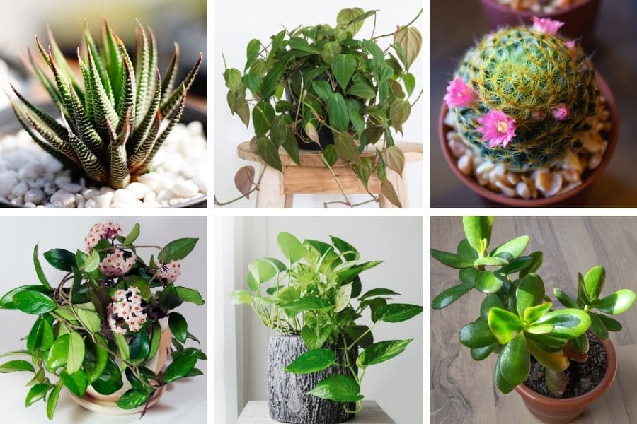 25 Hard To Kill Houseplants That Will Thrive In Your Home Smart Garden Guide