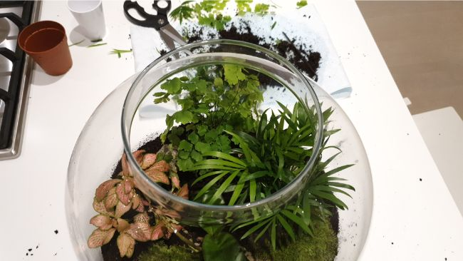 pruning closed terrarium