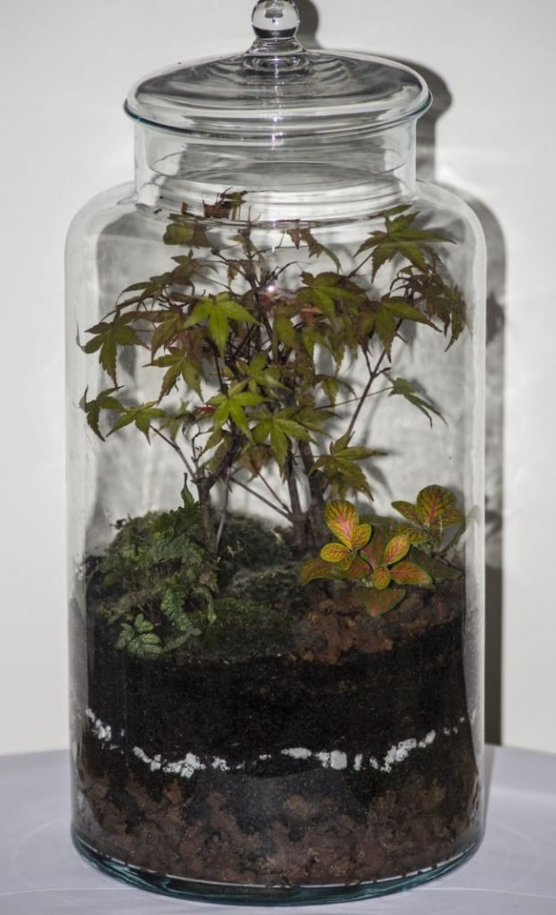 closed terrarium care questions