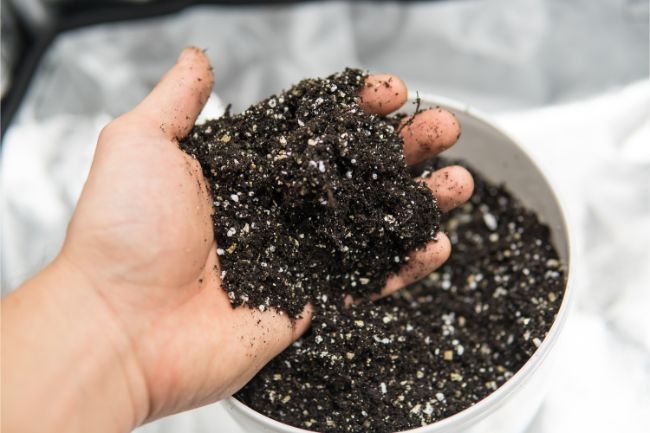 peat moss and perlite potting soil for indoor plants