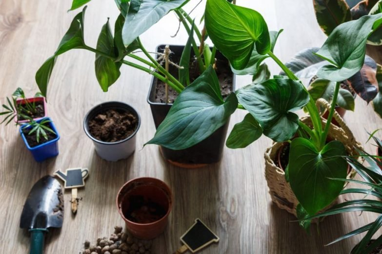 potting soil for indoor plants