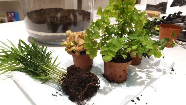 choosing plants for terrarium