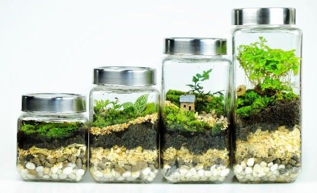 creative terrarium ideas