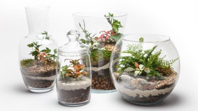 terrarium soil layers