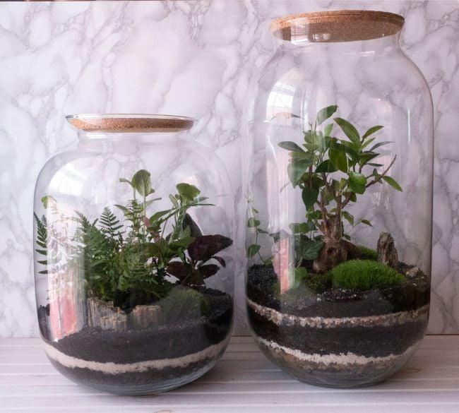 decorative terrarium soil layers