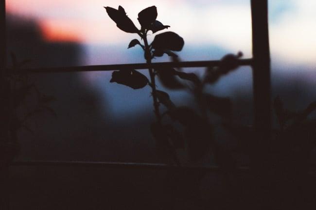 do plants grow at night