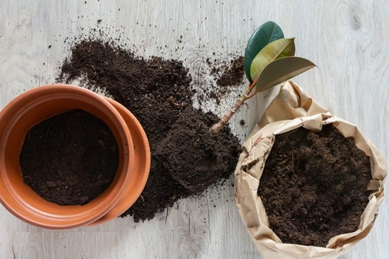 alternatives to peat moss