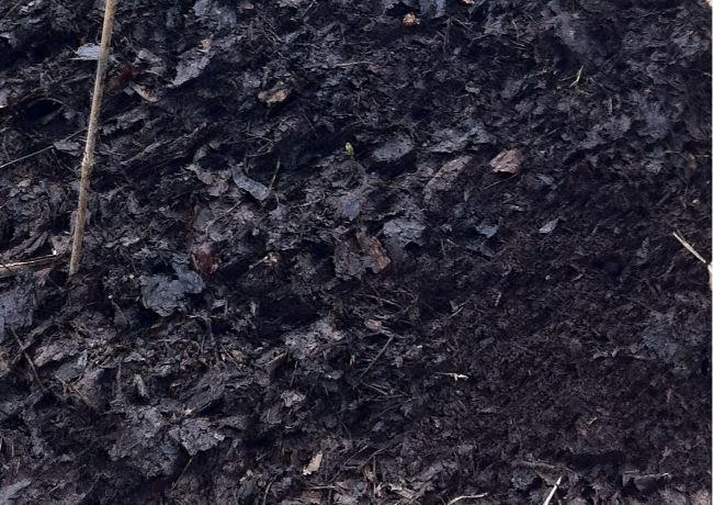 leaf mold as peat moss alternative