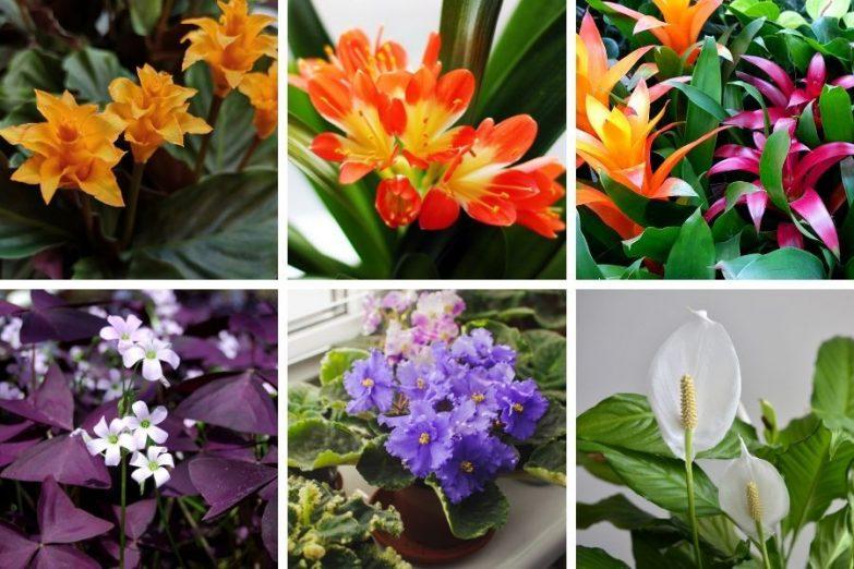 low light flowering indoor plants