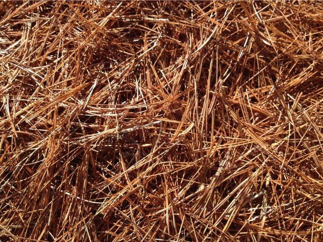 pine needles alternatives to peat moss