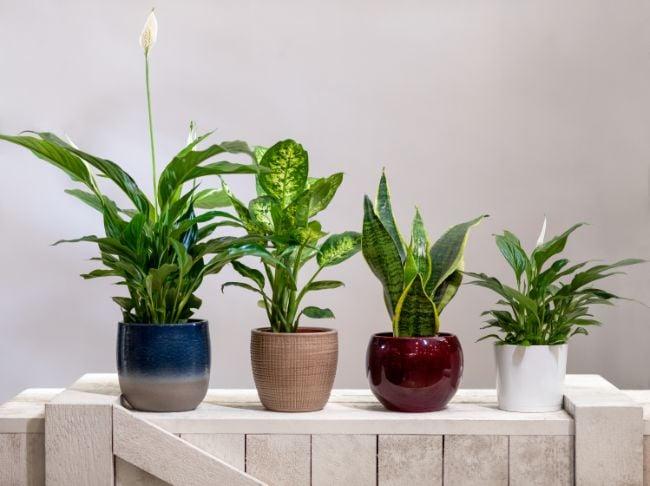 glazed clay pots for plants