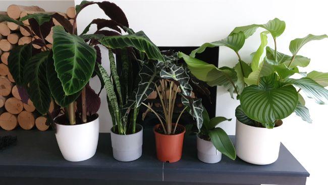 plastic vs clay pots for plants