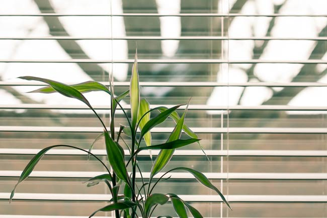 Can Plants Get Too Much Light
