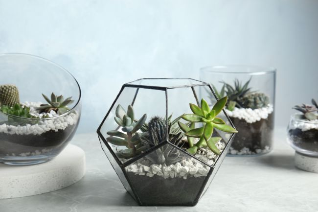 open terrarium care
