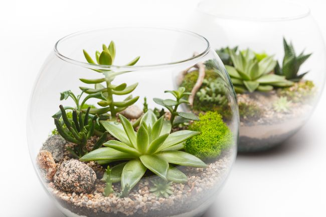 open terrarium plants for indirect light