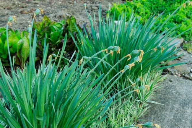 plant dormancy