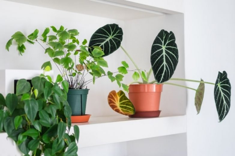 why do indoor plant leaves turn brown