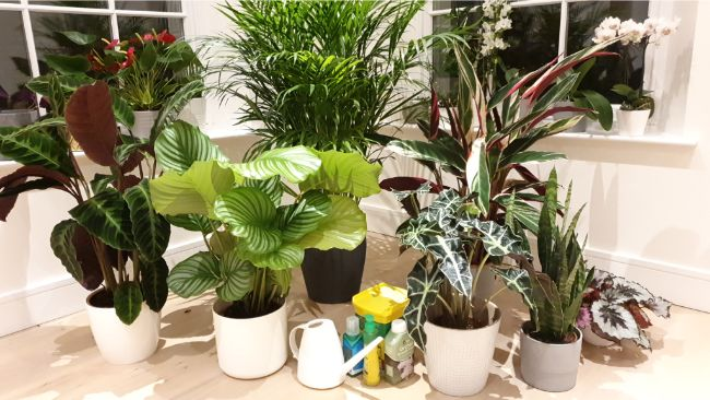 houseplants and a selection of fertilizers