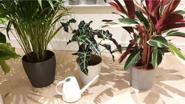 granulated vs water soluble fertilizer