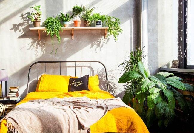 light requirements for indoor plants