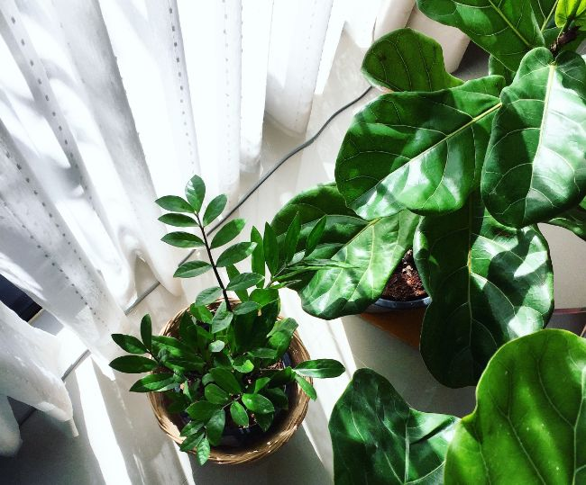 using blinds to reduce light intensity for indoor plants