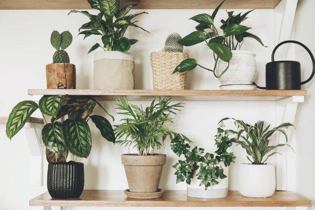 best water for houseplants