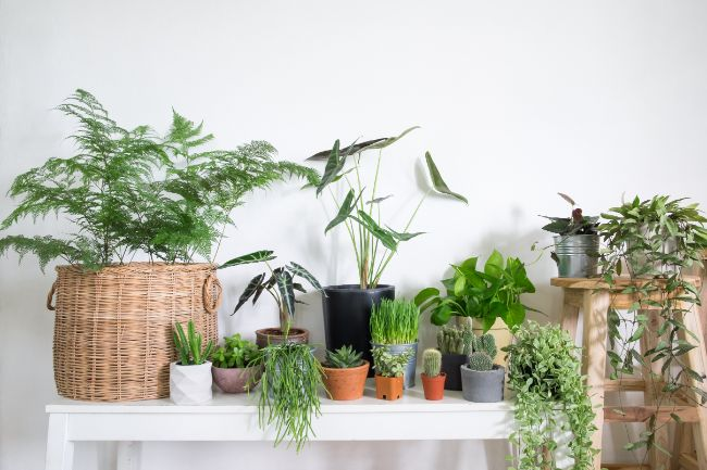 care for houseplants after pruning