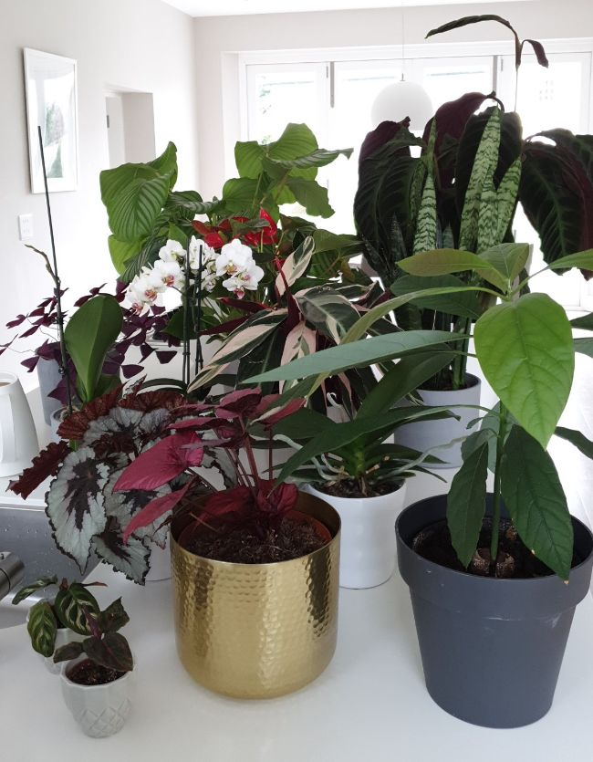 different pot sizes for indoor plants