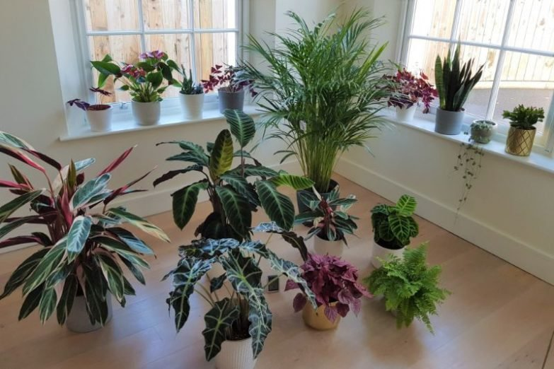 pots for indoor plants