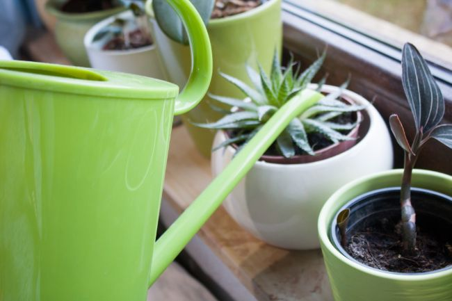 how to choose pots for indoor plants