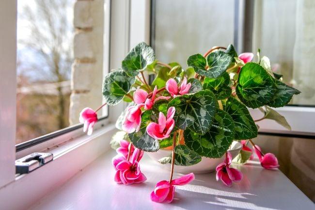 indoor plant drooping