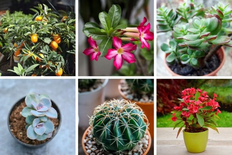houseplants for direct sunlight