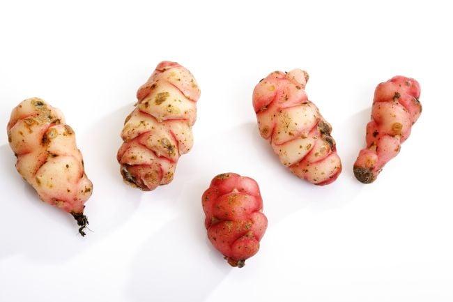 oxalis plant corms