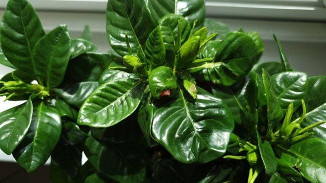 signs of overfeeding plants