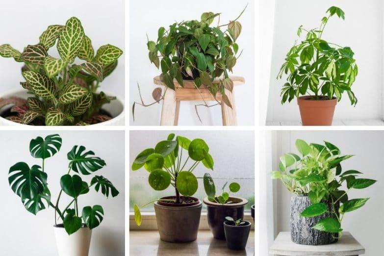easy houseplants to propagate