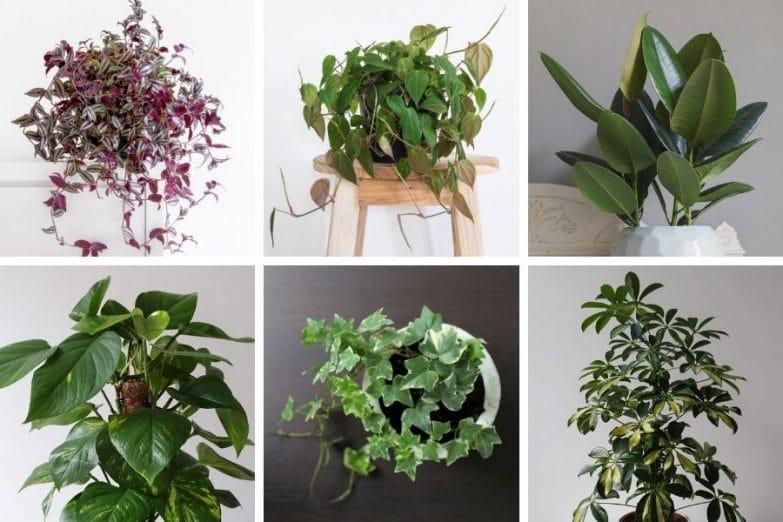 fast growing indoor plants