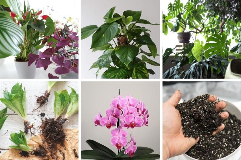 how to grow plants indoors beginners guide to growing houseplants