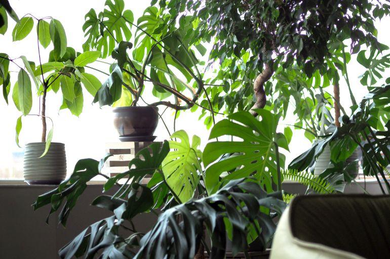 how to grow houseplants. How to grow plants indoors.