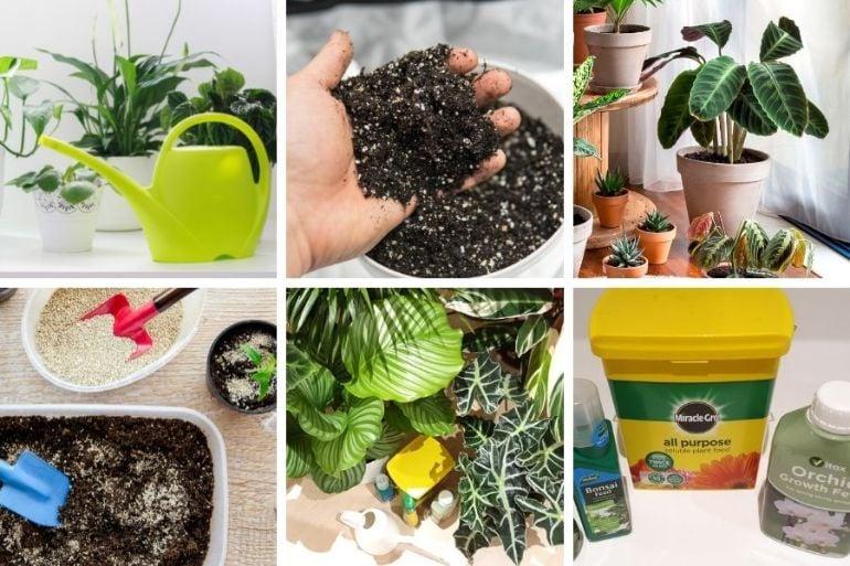 organic vs inorganic fertilizer