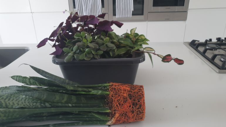 bottom watering plants